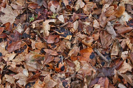 20121109-brown_leaves.jpg